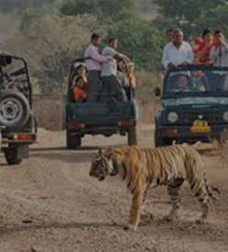 Golden Triangle with Wildlife Safari Packages